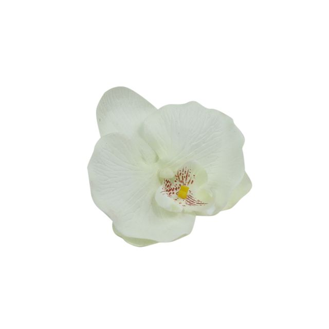 orquidea-branca